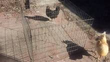 ZInc Coated Wire holding Cage Clontarf Redcliffe Area Preview