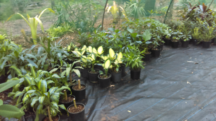 Lots of plant's wholesale prices.