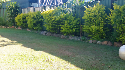 Home and yard maintenance Beerwah Caloundra Area Preview