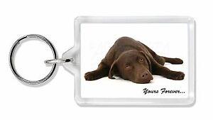 Chocolate-Labrador-Perro-Love-Foto-LLAVERO-DE-ANIMALES-REGALO-ad-l59k