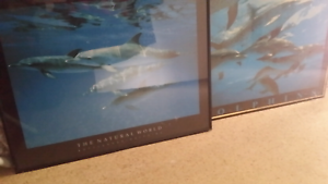 Dolphin wall pictures Pennington Charles Sturt Area Preview