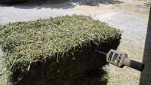 Prime lucerne small square bales for sale East Tamworth Tamworth City Preview