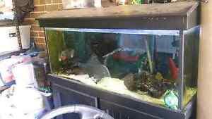 4 Foot fish tank with aqua one aquios 1200 Harrington Park Camden Area Preview
