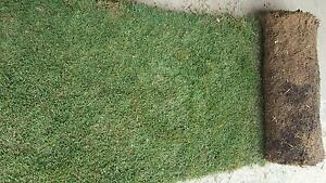 Winter Green Roll on Lawn - Trade Autumn Special $3.30m2 Carabooda Wanneroo Area Preview