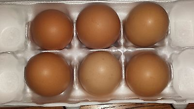 12 Fertile Chicken Hatching Eggs Assorted Poultry Barn Yard Mix Priority Ship