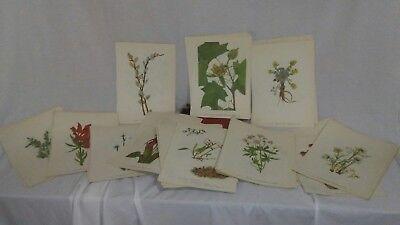 12 Vintage MARY WALCOTT Botanical Wildflower Art Prints