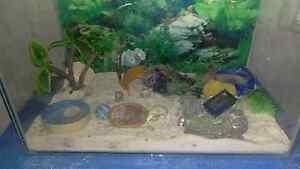 Crazy crab tank Brookdale Armadale Area Preview