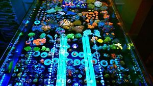 All fancy corals and coral Frags for your reef tank
