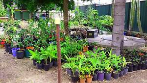 PLANT SALE - PLANTS FROM $2 Marsden Logan Area Preview