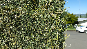 CHEAP GRASSY LUCERNE HAY BALES & 36-40KG CHAFF!! Can Deliver!! Logan Village Logan Area Preview