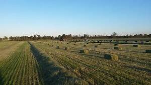 Quality Rye grass hay Millers Forest Maitland Area Preview