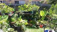 Large plant sale Friday morning Pottsville Tweed Heads Area Preview