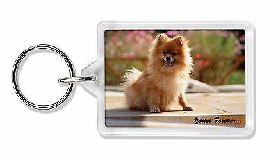 Pomeranian Dog 'Yours Forever' Photo Keyring Animal Gift, AD-PO89yK