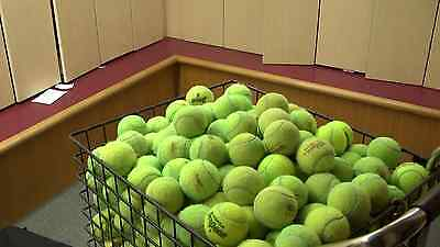 200  Mixed Tennis Balls Wilson Penn Dunlop Dog Toy Lot