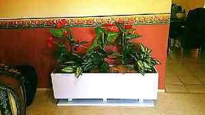 .white gloss display pot planter fake artificial plastic plants.. Redland Bay Redland Area Preview