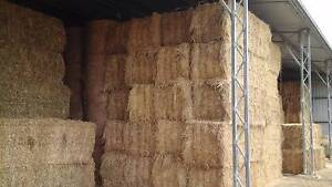 Hay bales 4x4 rounds and 8x3x3 squares for sale Boonah Qld Boonah Ipswich South Preview