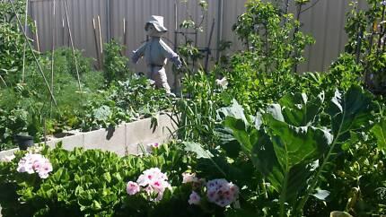 Gardening and Home Maintenance