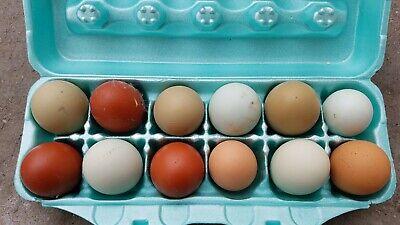 12barnyard Mix Chicken Hatching Eggs