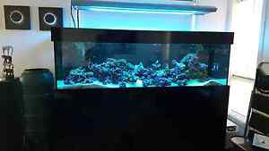 7ft Marine Tank Trott Park Marion Area Preview