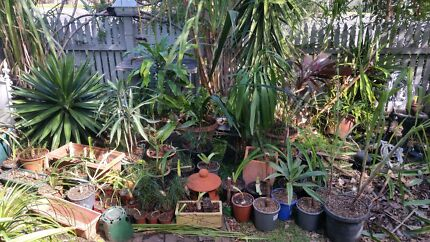 Palms Tree Ferns & Natives $250 Woonona Wollongong Area Preview