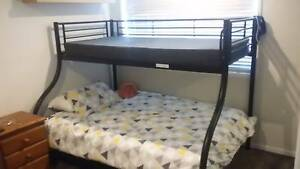 Queen Size Bunk Bed Ashmore Gold Coast City Preview