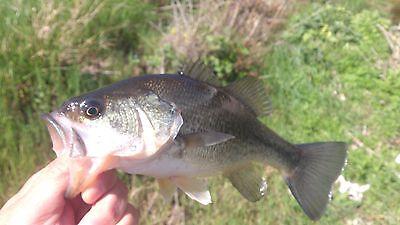 Ocio Pesca