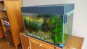 75 cm Fish tank with fish and  live plants Kenmore Brisbane North West Preview