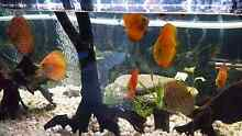7 discus asap sale Upper Coomera Gold Coast North Preview