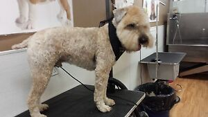 Professional Mobile Dog And Cat Groomer 25+Yrs Exp!