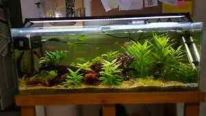 4ft 200L fish tank + stand + Tropical LED light + Cannister Filte Alexandra Headland Maroochydore Area Preview