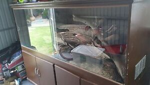 Reptile enclosure Woodville South Charles Sturt Area Preview