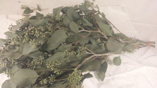 Seeded Eucalyptus, Fresh Cut, wholesale, DIY-fresh greens & Foliage