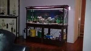 5x2x2 foot fish tank including everything Mansfield Brisbane South East Preview