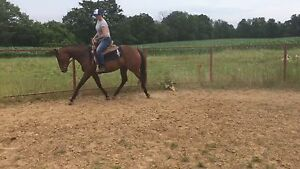 Pepper  3 yr old registered thoroughbred