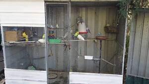 Budgies and Aviary x2..URGENT SALE Bendigo Bendigo City Preview