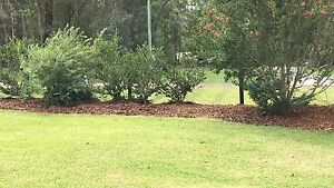 Weeding mulching mowing hedging fencing Cooranbong Lake Macquarie Area Preview