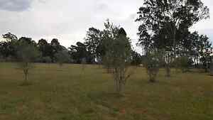 Olive trees approx 60+ Lower Belford Singleton Area Preview