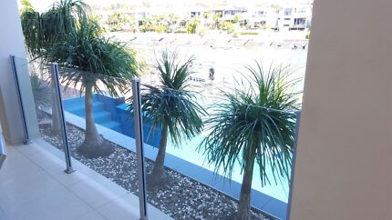 PONY TAIL PALMS X 5 - $200 Hope Island Gold Coast North Preview