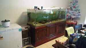 6x2x2 fish tank Munno Para West Playford Area Preview