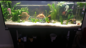 Freshwater aquarium 4ft tank, Stand and accessories Highland Park Gold Coast City Preview