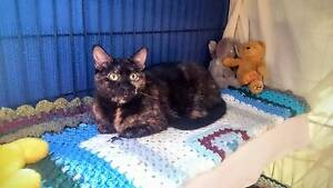 HELP SAVE THE KITTIES Elizabeth Park Playford Area Preview