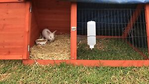 Rabbit hutch Weston Cessnock Area Preview