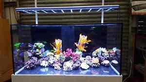 Aquarium Brand New Aqua Reef 395 $2599 complete set Doveton Casey Area Preview