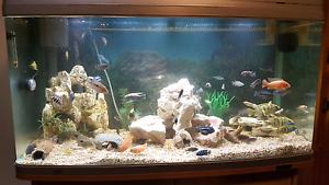 Aquaone 980 Aquarium with stand Ermington Parramatta Area Preview