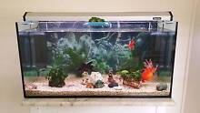FISH TANK AWESOME SETUP, FRESHWATER, FISH, FILTERS, LIGHTS + MORE Mount Gravatt East Brisbane South East Preview