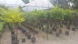 Standard sale wholesale plant's direct Cranbourne South Casey Area Preview