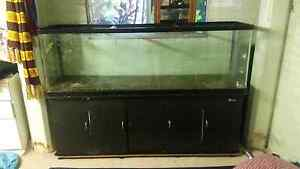 6 foot fish tank Warner Pine Rivers Area Preview