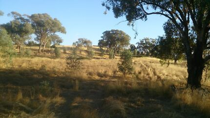 COOTAMUNDRA  WATTLE 11 ACRES Town water Vendor Finance available