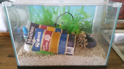Hermit crab tank complete set up Old Bar Greater Taree Area Preview