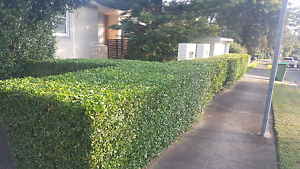 Lawnmowing Hedging Edging services Bankstown Bankstown Area Preview
